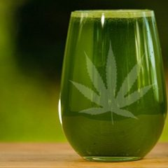 Benefits and uses of marijuana juice